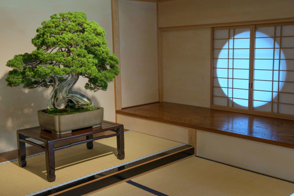 Plant as part of Japanese Home design via Simphome