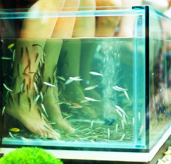 simphome fish tank