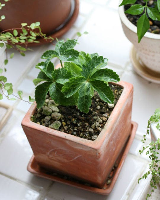 1 Create a Mini Garden Via SImphome com