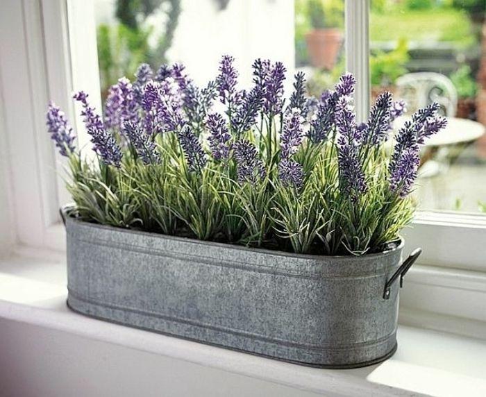 simphome lavender