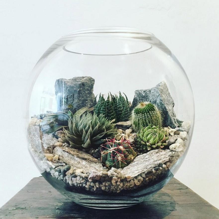 simphome terrarium