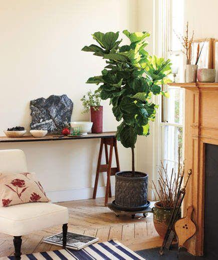 20 Set some green plants simphome com