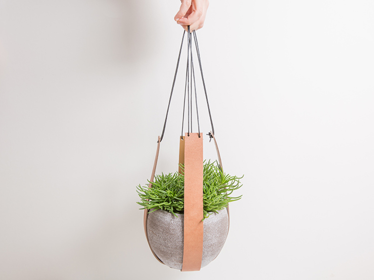 Potted leather plant Simphome com