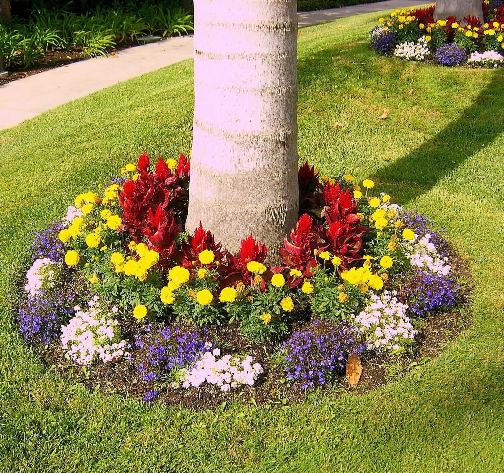 15 Plant Flowers at the Bases of Trees Simphome com