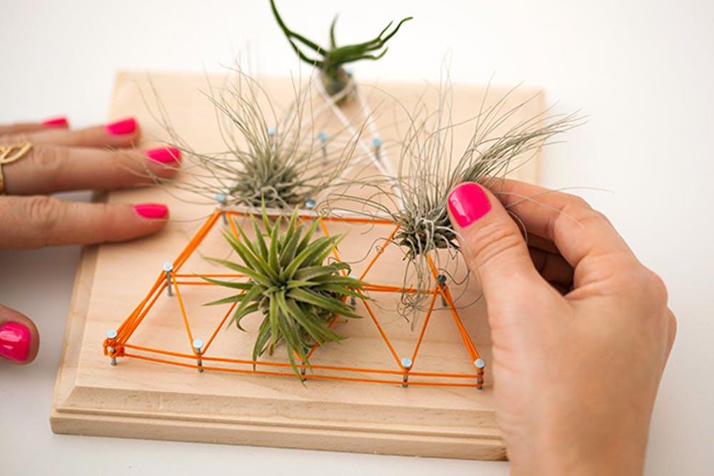16 Air Plants String Art Living Wall Art Simphome com