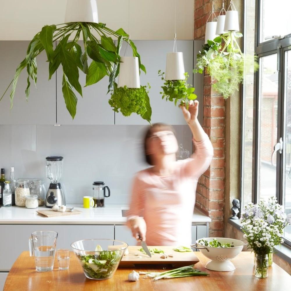 76 Hanging Herbs via simphome