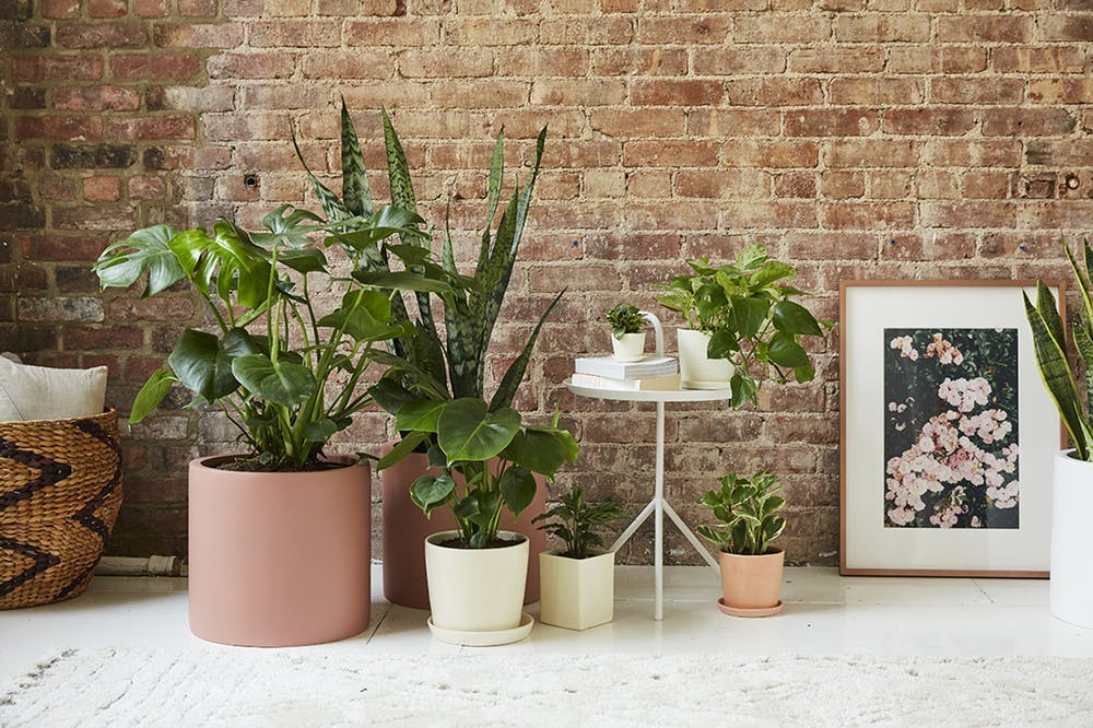 19 Use some plants via simphome