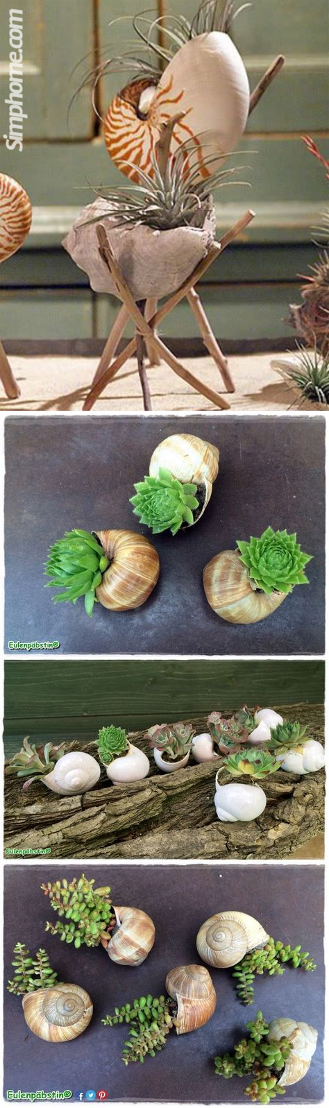 3 Seashell2BPlanters simphome com