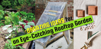 Organizing Ideas for an Eye Catching Rooftop Garden VIA SIMPHOME COM