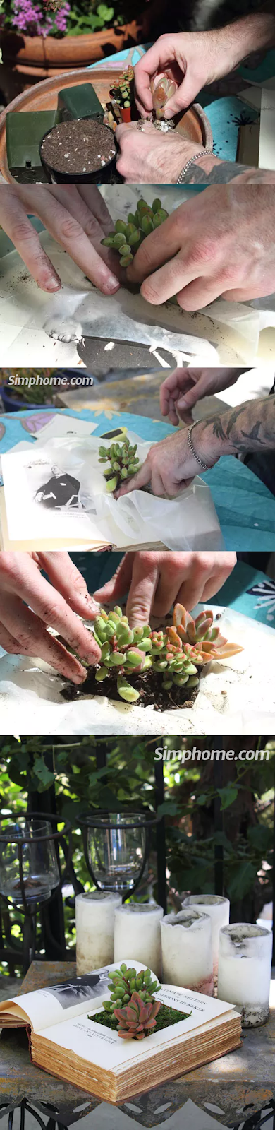 Succulents2BBook2BPlanters simphome com