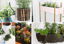 10 Clever and Cheap Indoor Garden Ideas Simphome Featured