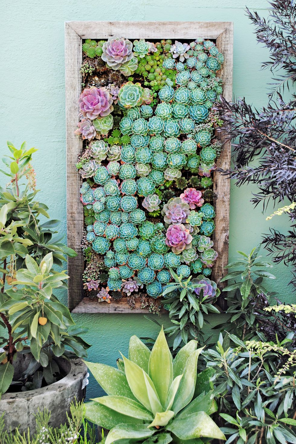 6 Tray Pot for Succulent via simphome