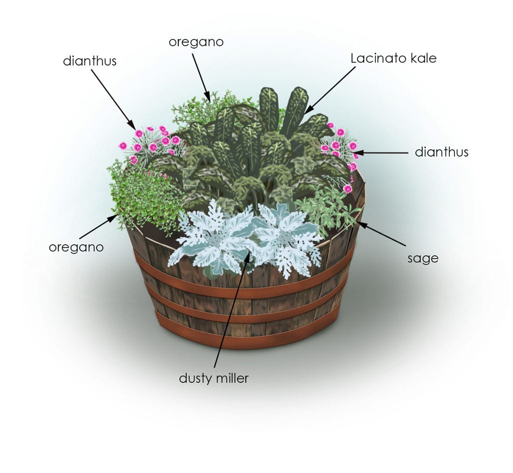 container arrangement to plant gardening ideas on plans for for 10 plant combination ideas for container gardens awesome and gorgeous