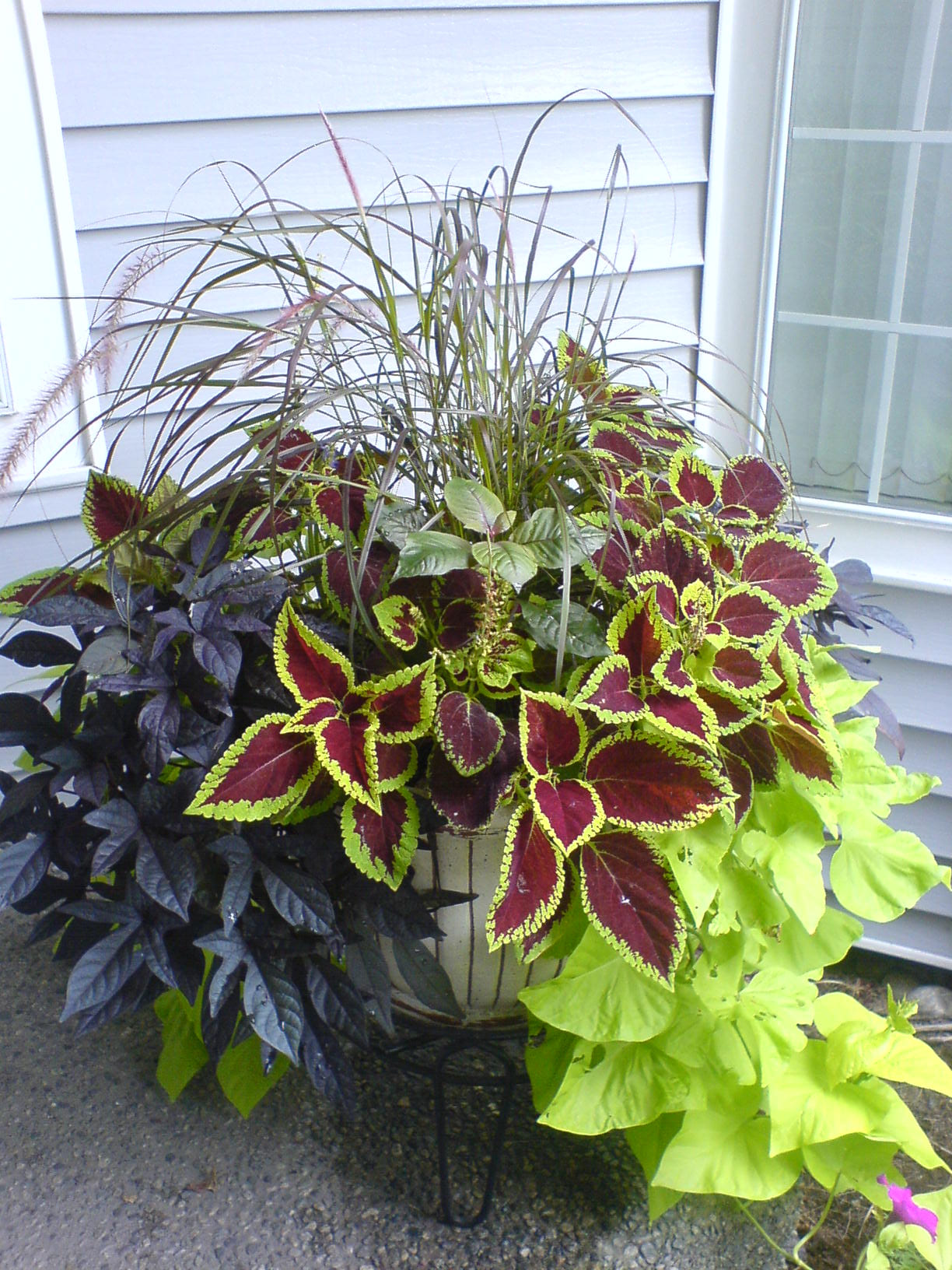 container gardening in plant combination ideas for container gardens