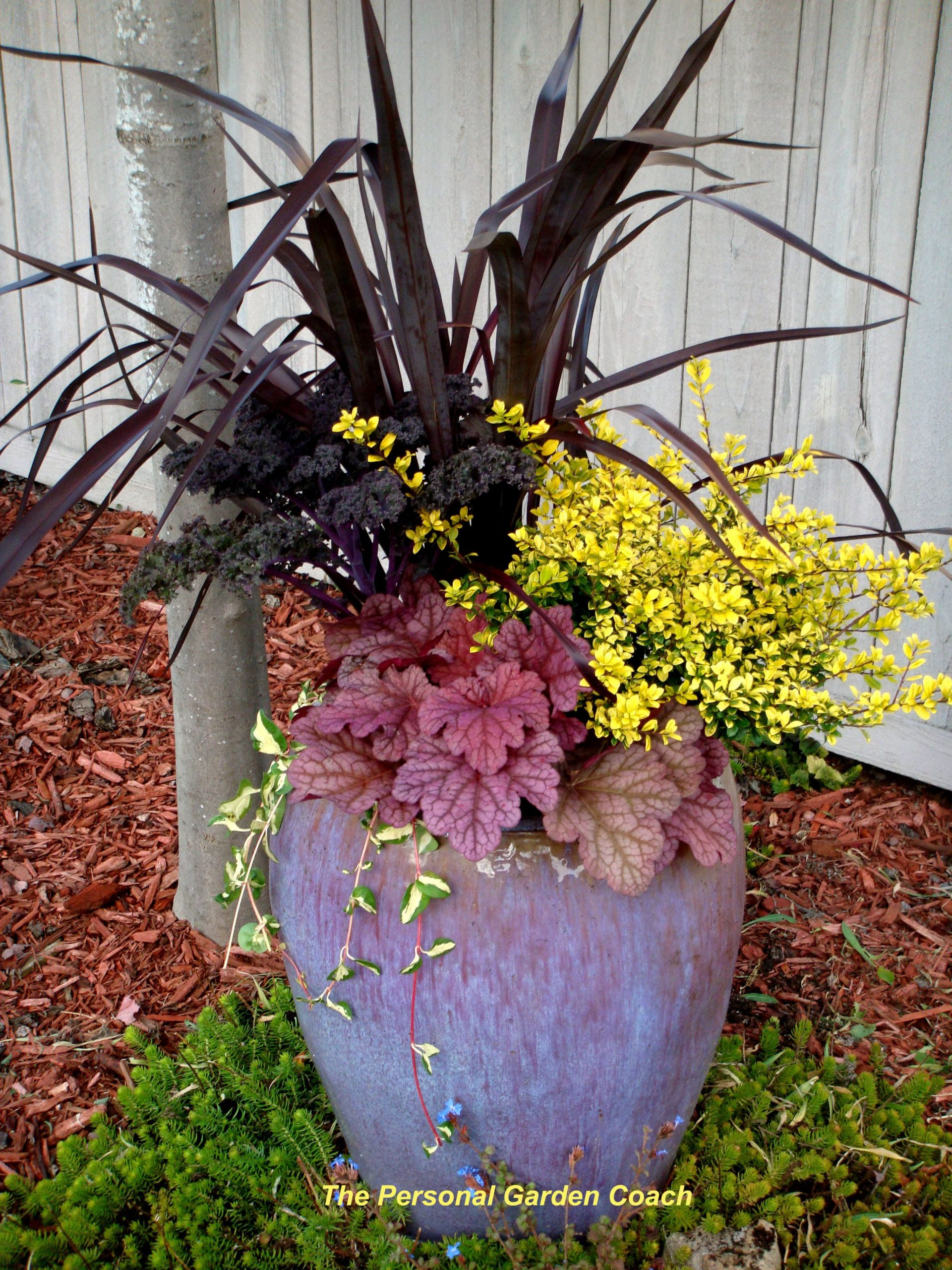 gardening in containers for plant combination ideas for container gardens