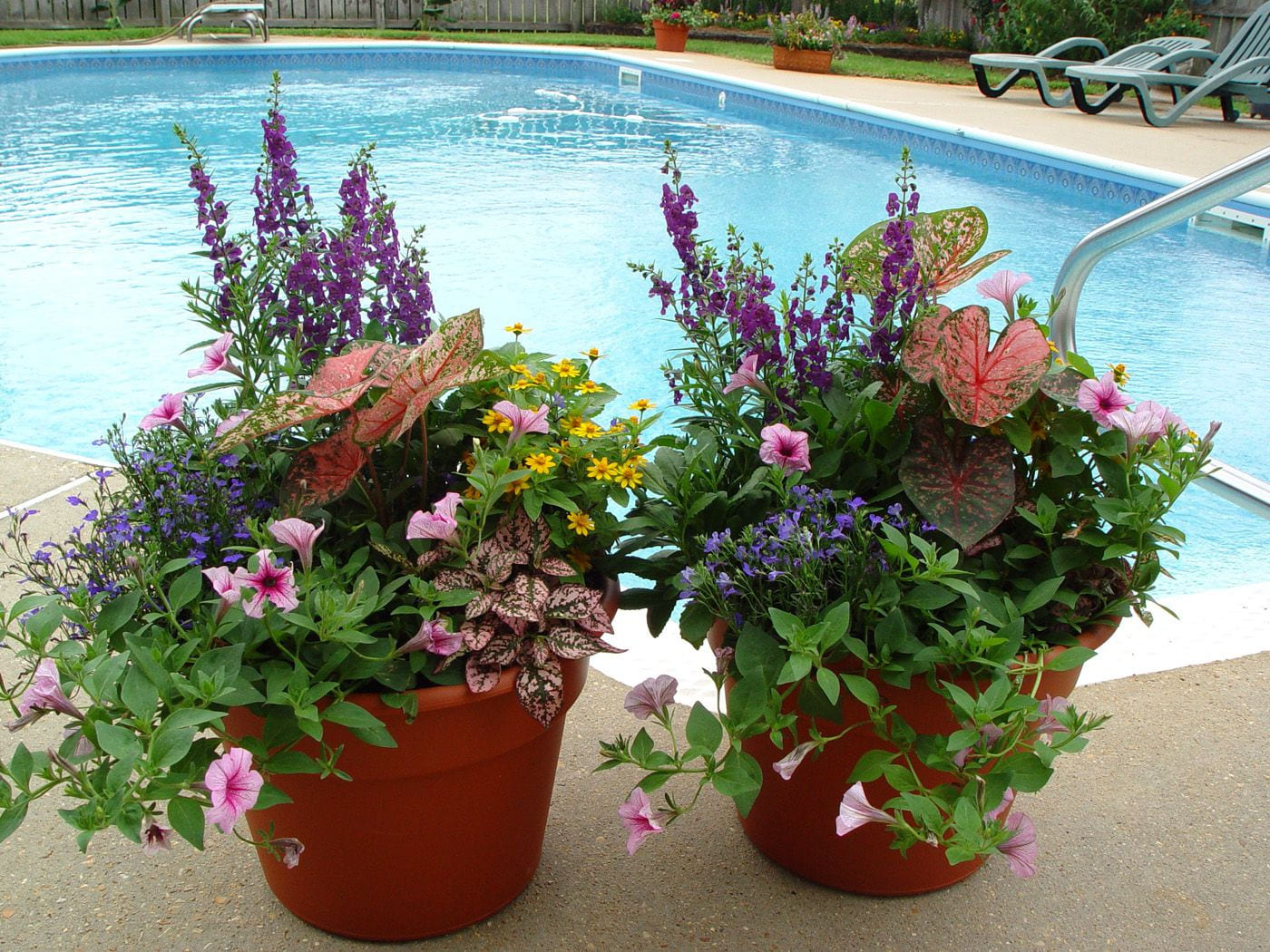 great plant combination will have to try this when i plant my pots with 10 plant combination ideas for container gardens awesome and gorgeous