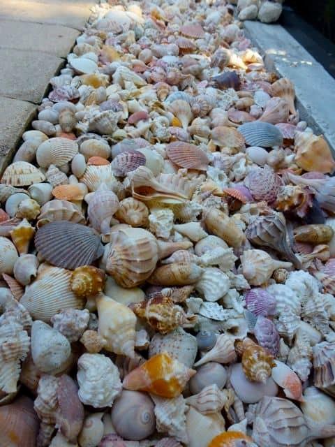 1. Sea Shell Edging via Simphome