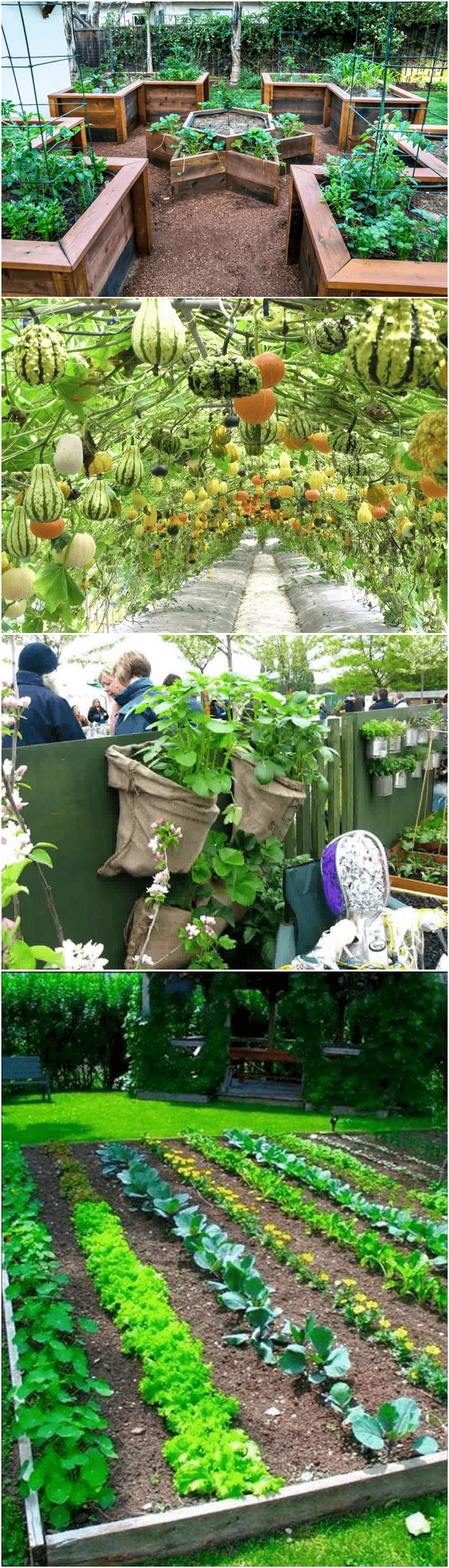 Simphome.com home vegetable kitchen garden.ideas