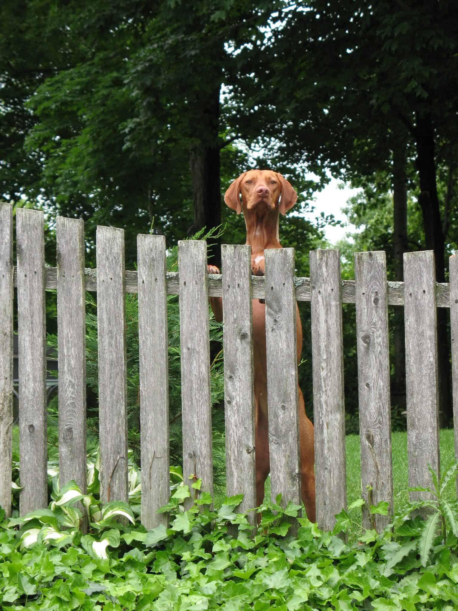 12.dog run ideas how to build a backyard dog run guide VIA SIMPHOME.COM 1