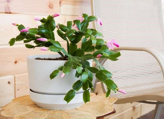 6. Holiday Flowers via SIMPHOME.COM