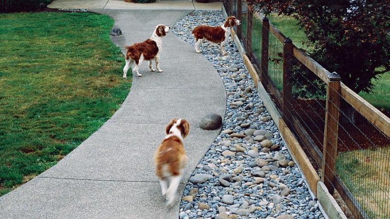7.Always keep your dogs safe via Simphome.com