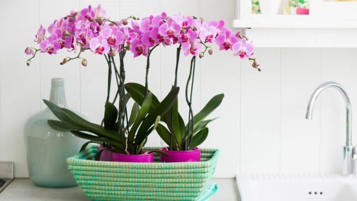 8. Moth Orchids via SIMPHOME.COM