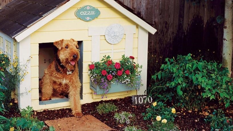 8.Provide your dog with a convenience shelter via Simphome.com