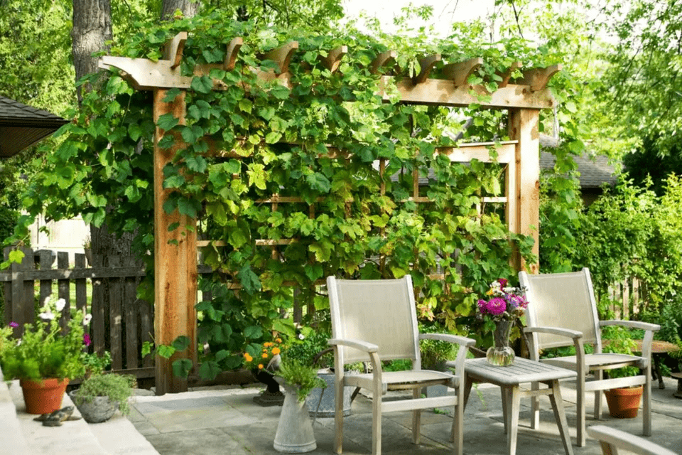 1. Trellis with Vine via SIMPHOME.COM