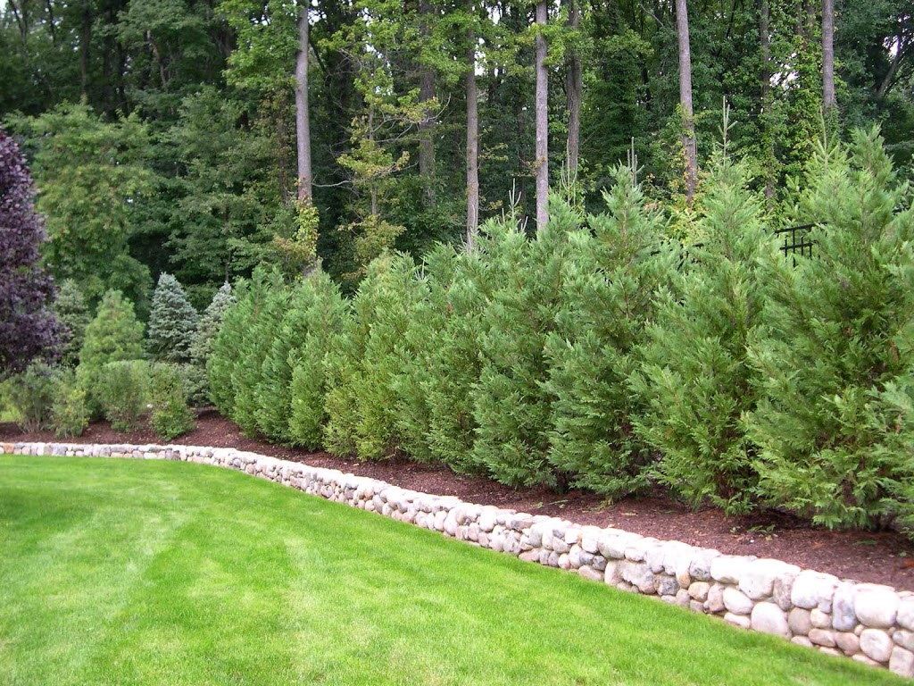 15.SIMPHOME.COM trees and plants for privacy truesdale landscaping image with 10 backyard privacy landscaping