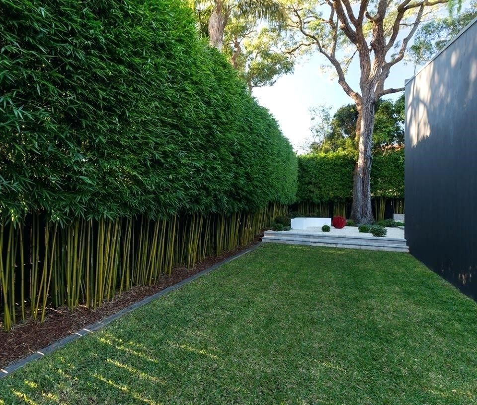 2.SIMPHOME.COM 10 Ideas how to make backyard privacy landscaping Bamboo block