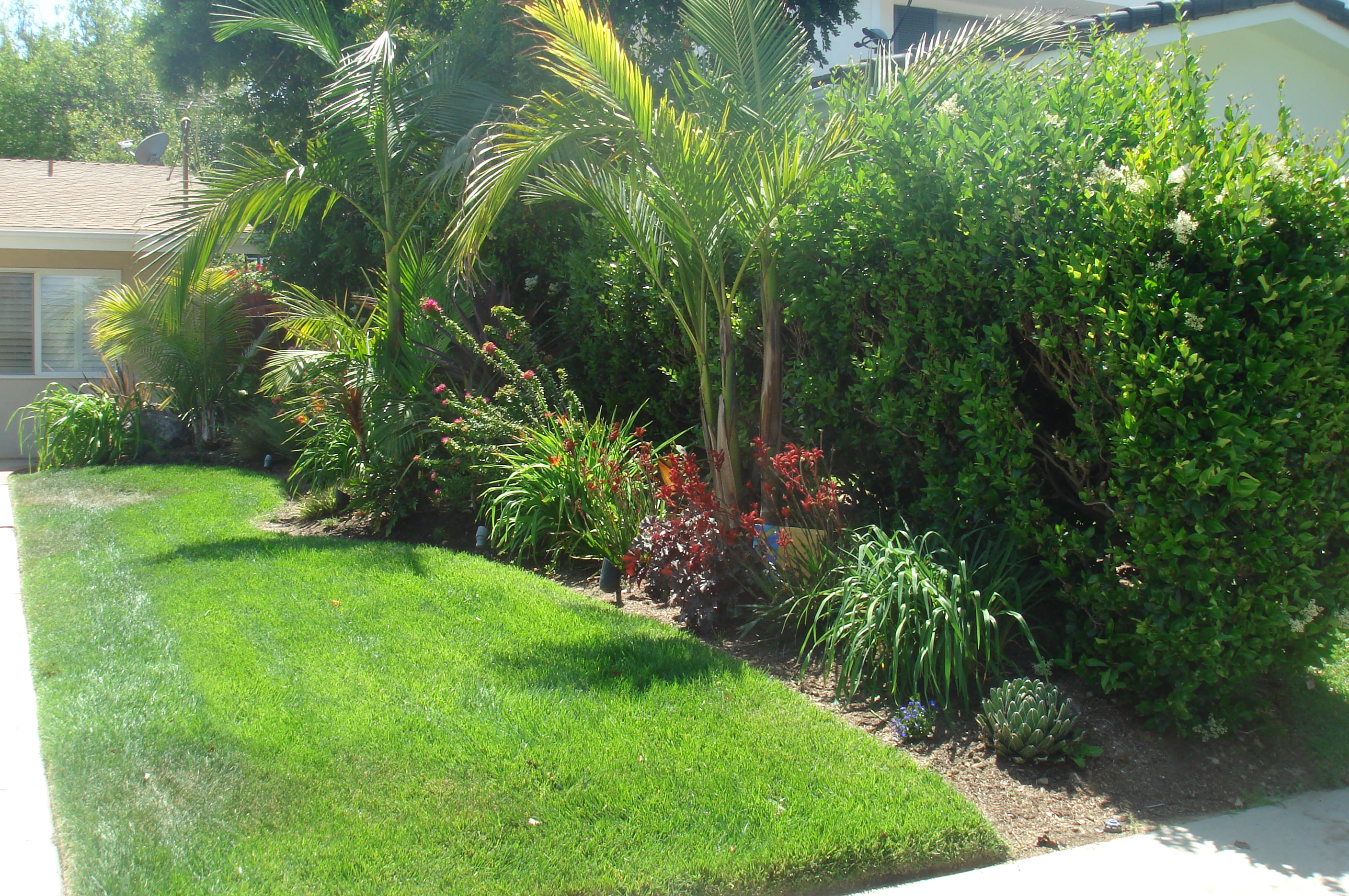 10+ Awesome Ideas How to Make Small Tropical Backyard ...
