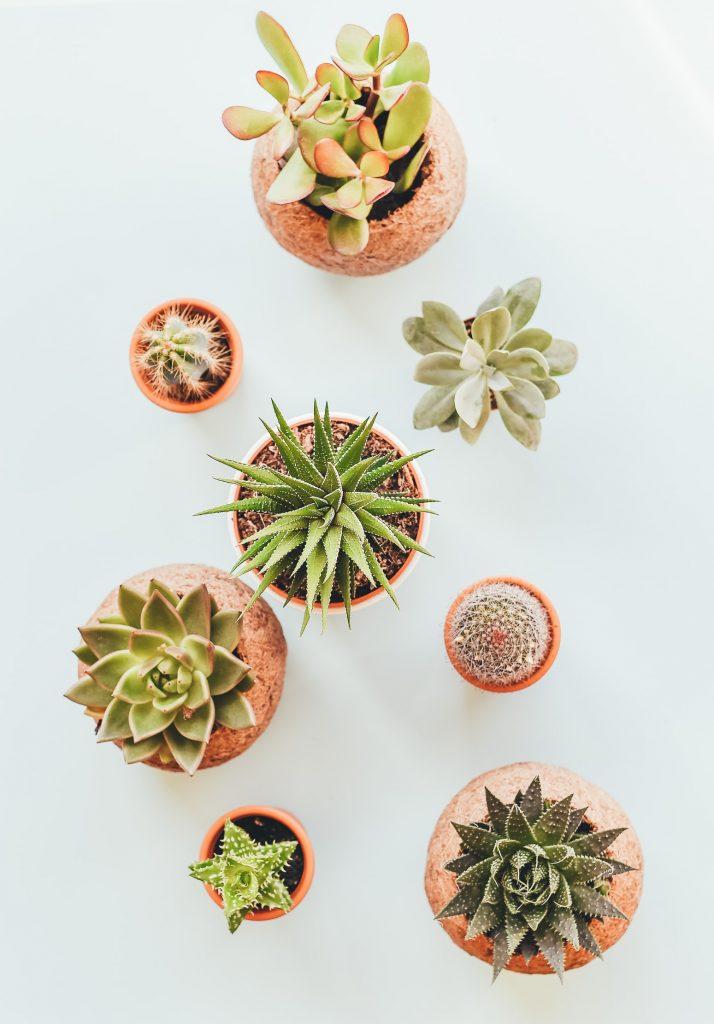 Simphome.com Potted succulent