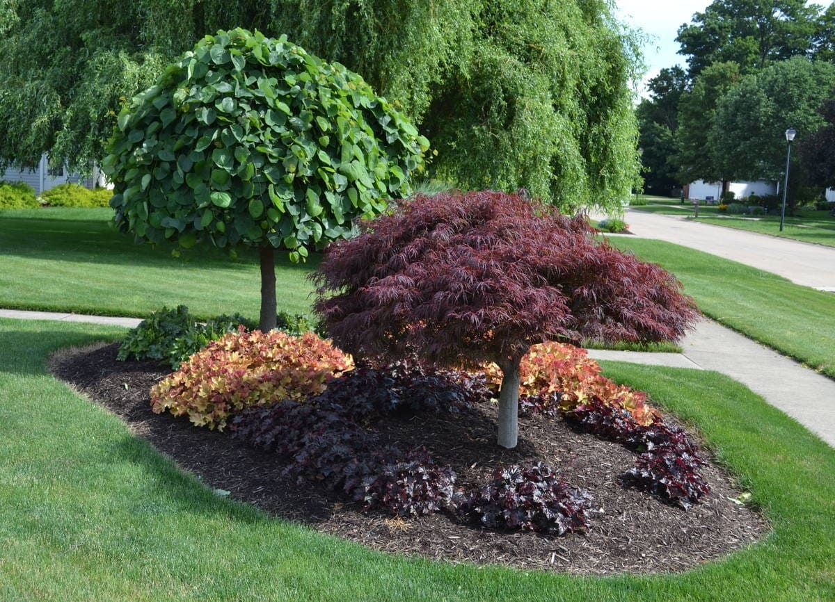 Simphome.com trees for backyard landscaping 23 landscaping ideas with photos for 2020 2021