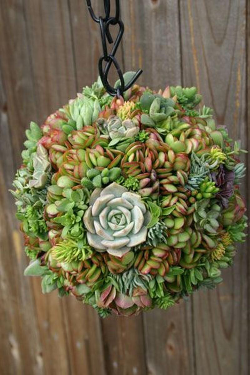 1. Simphome.com Succulent Sphere Garden Project