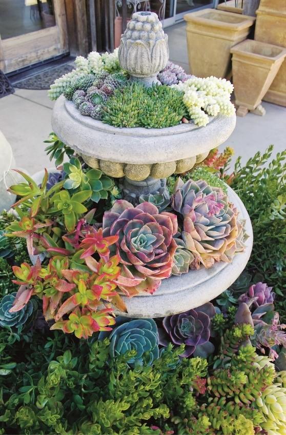 10. Simphome.com Fountain Succulent idea