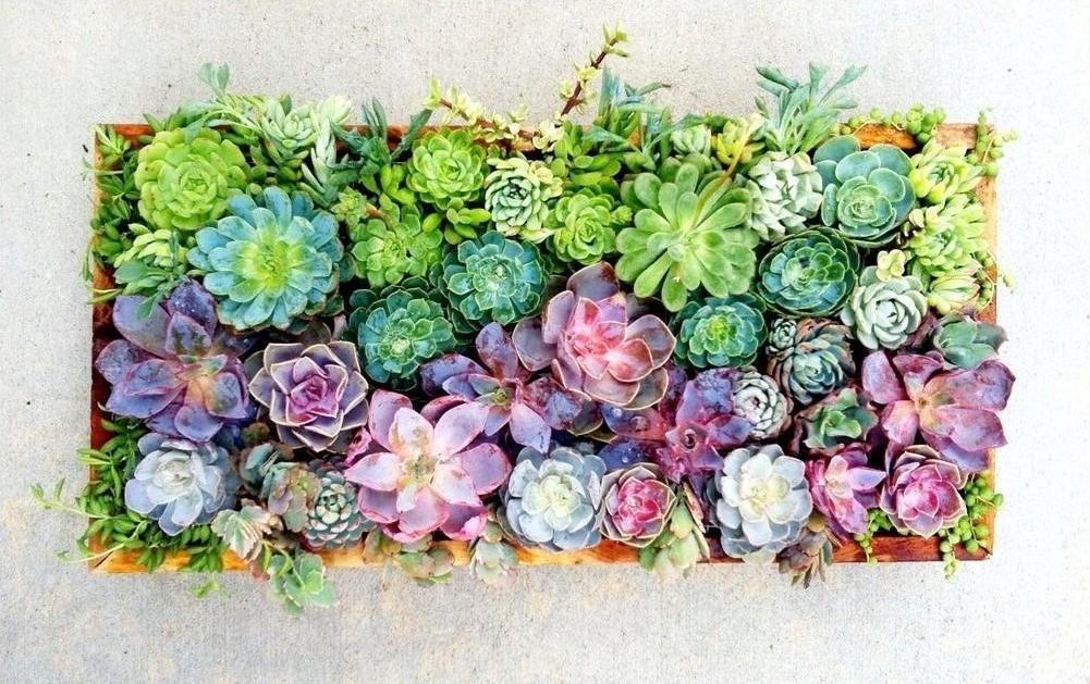 8. Simphome.com Succulent in a Box