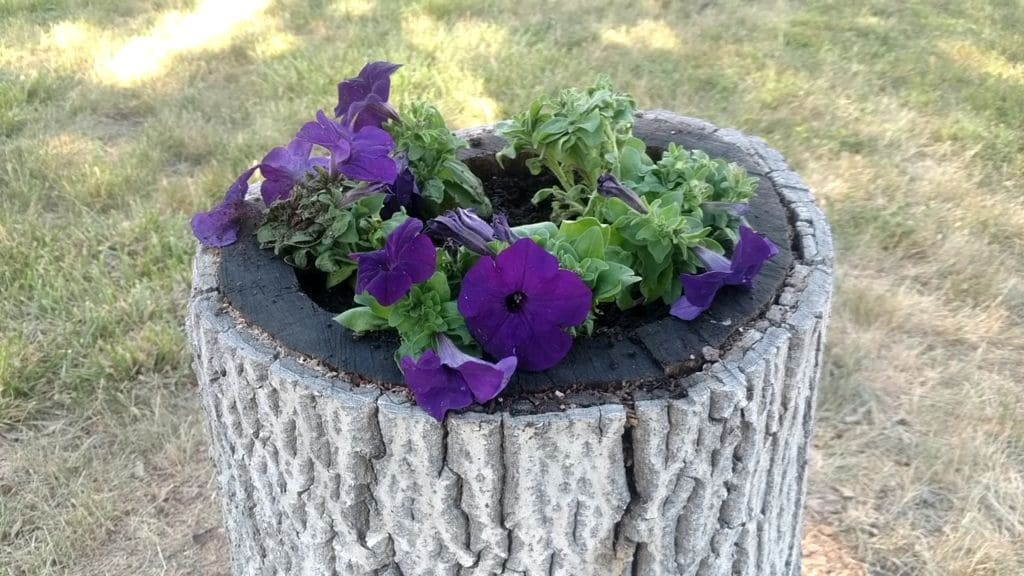 9.Simphome.com A Tree Stump into a Beautiful Flower Bed