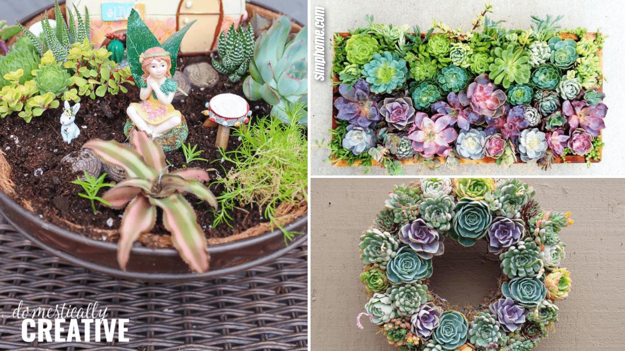 10 Succulent Garden Ideas For Small Planting Area Simphome