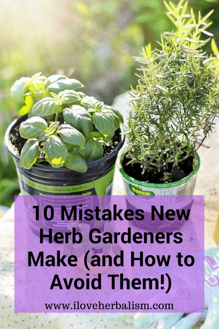 Simphome.com great informative article to read if you planning to grow some pertaining to potted herb garden ideas