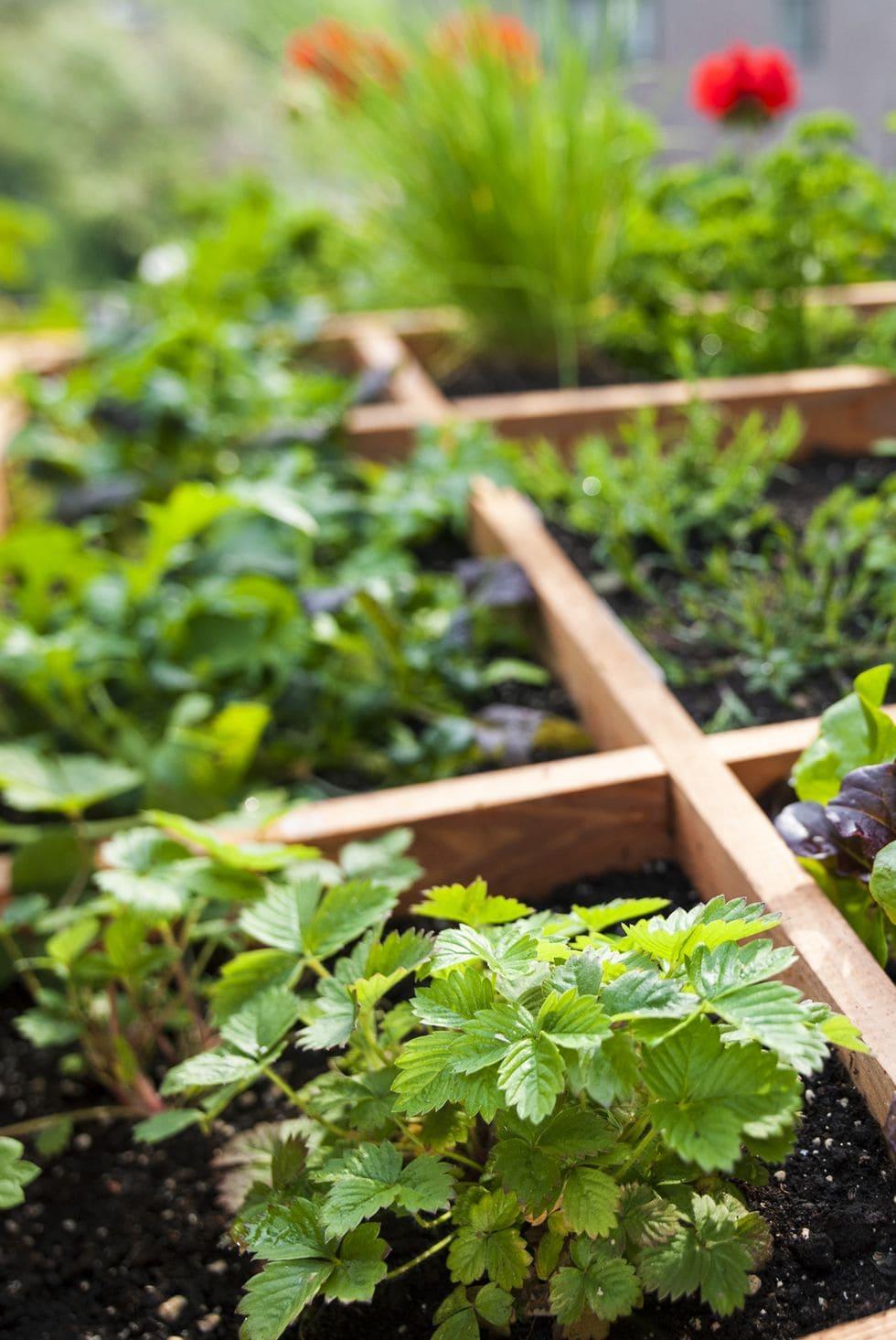 3.Simphome.com Square Foot Gardening