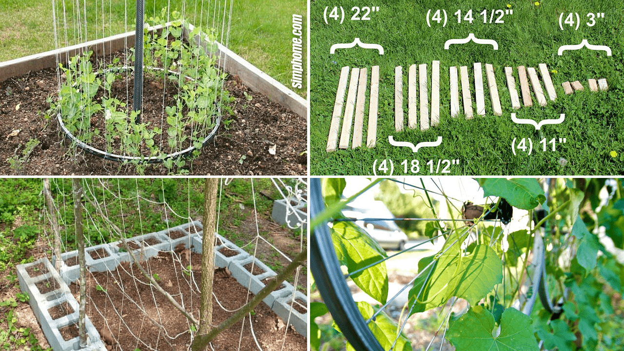 Simphome.com 10 vegetable garden trellis ideas featured Image