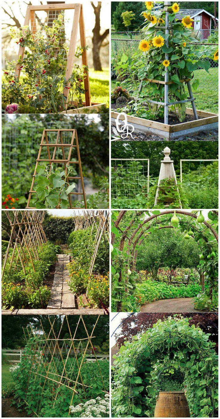 10+ Vegetable Garden Trellis Ideas - Simphome