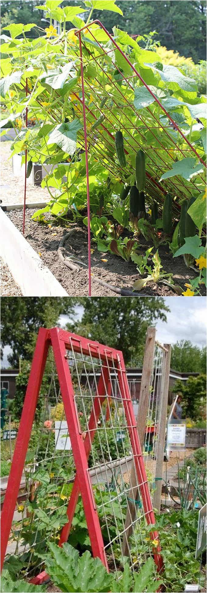 Simphome.com easy diy garden trellis ideas vertical growing structures 1