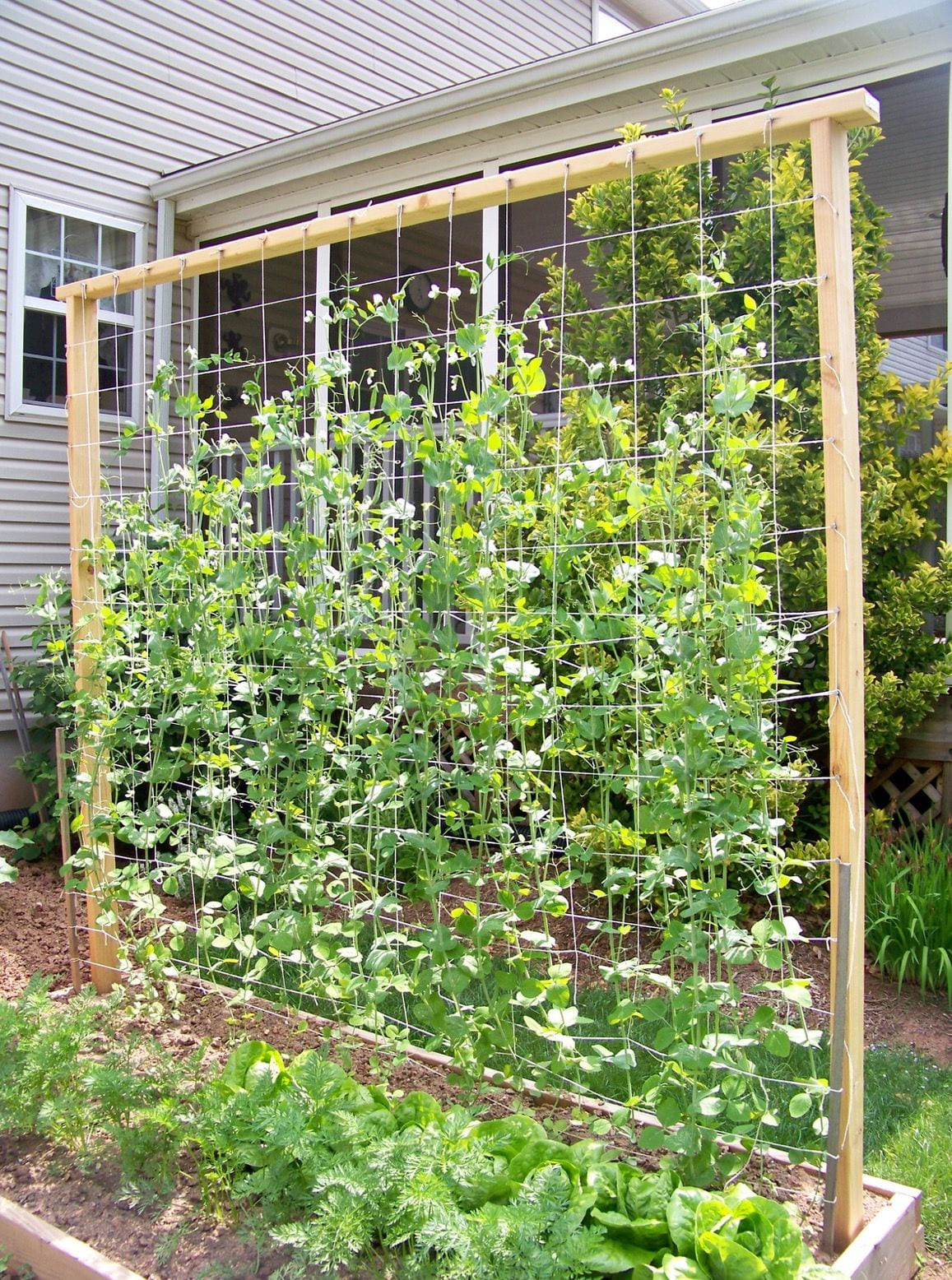 Simphome.com pin michelle abriani on garden pinterest garden trellis for vegetable garden trellis ideas