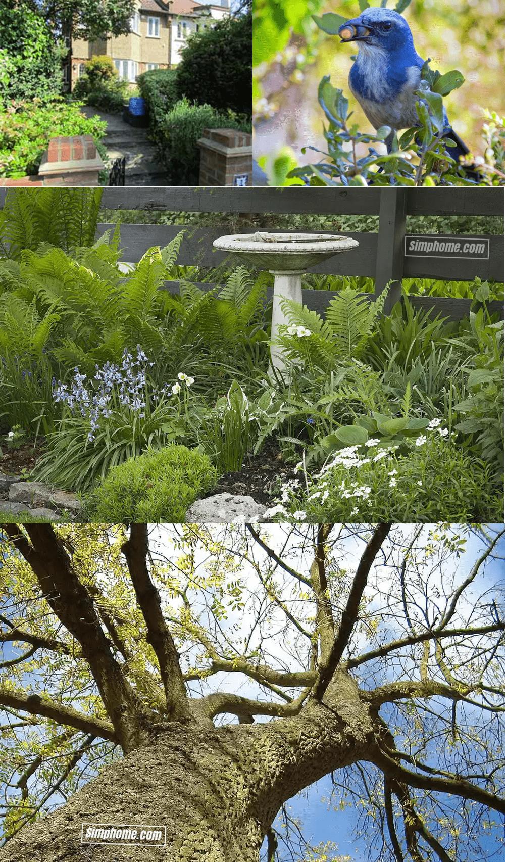 10. Simphome.com Use Native Plants