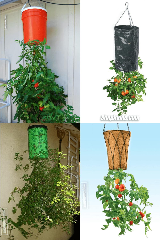 10.Simphome.com An Upside Down Tomato Planters project idea
