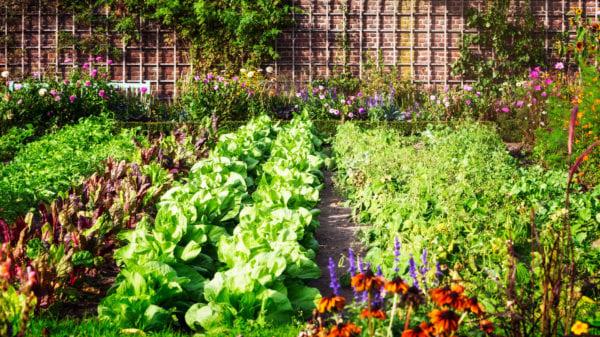 5.Simphome.com Community Garden 2