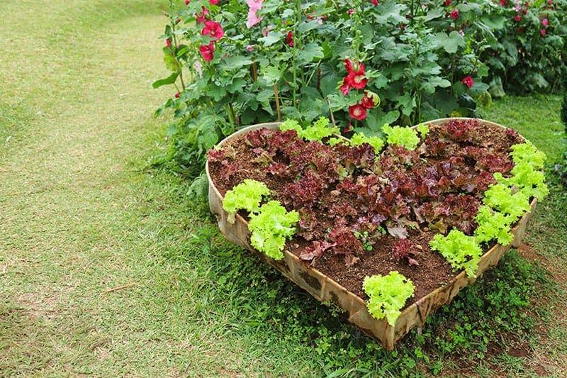 6.Simphome.com Heart Shaped Vegetable Garden