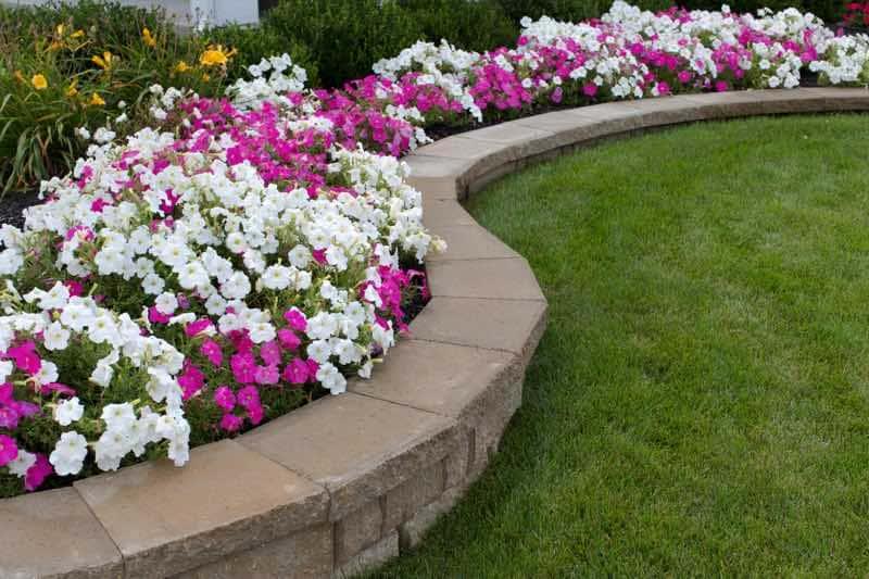 7.Simphome.com Grow Petunias 2