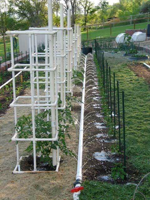 7.Simphome.com PVC Pipe Tomato Cage 1